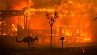 Brände in Australien