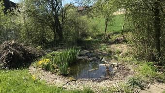 Feuchtbiotope und Asthaufen, wie sie hier in diesem Garten zu sehen sind, sind optimale Möglichkeiten, um einen Garten naturnah aufzuwerten.