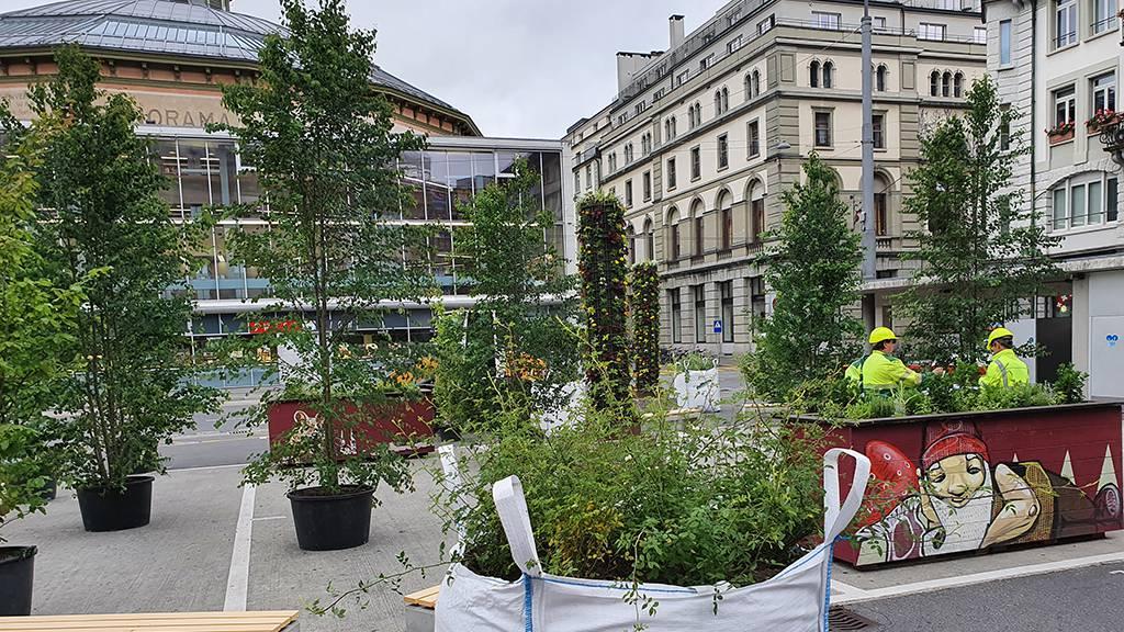 Pflanzen statt Cars: So sieht Mini-Park am Löwenplatz aus