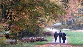 Spaziergänger in einem Waldgebiet.