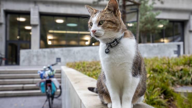 Haustiere wie Katzen sind nach wie vor am meisten von Widerhandlungen gegen das Tierschutzgesetz betroffen. (Symbolbild)