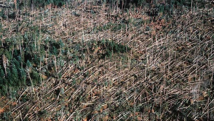"""Vor 20 Jahren, am 26. Dezember 1999, hat der Sturm """"Lothar"""" über zehn Millionen Bäume in der Schweiz umgeworfen. (Archivbild)"""