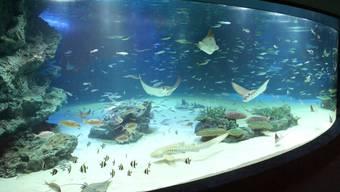 So sah das öffentliche Aquarium in der Sunshine City vor dem Unglück aus. Nach einer Aquariumsreinigung erstickten fast alle Fische.