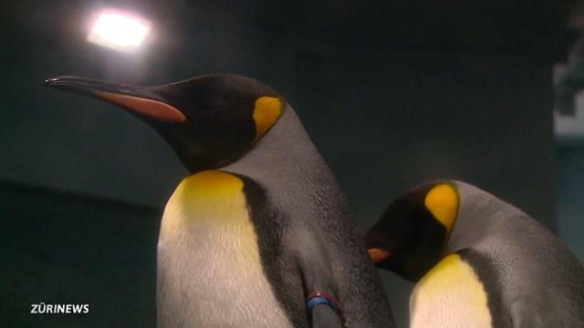"""Neues """"Nemo""""-Paradies im Zoo Zürich"""