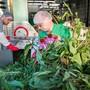 Das Heilkraut Echinacea bei der Verwertung zum Heilmittel in der Bioforce Vogel AG in Roggwil (TG).