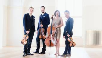 Das Stradivari Quartett hat sich zu einem führenden Ensemble entwickelt.