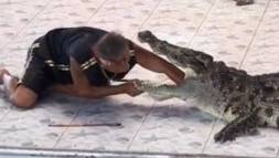 Mitten in einer Reptilien-Show vor rund 100 Zuschauern beisst das Tier in den Arm des Trainers. Zur Krokodil-Attacke kam es im Phokkathara Zoo in Thailand.