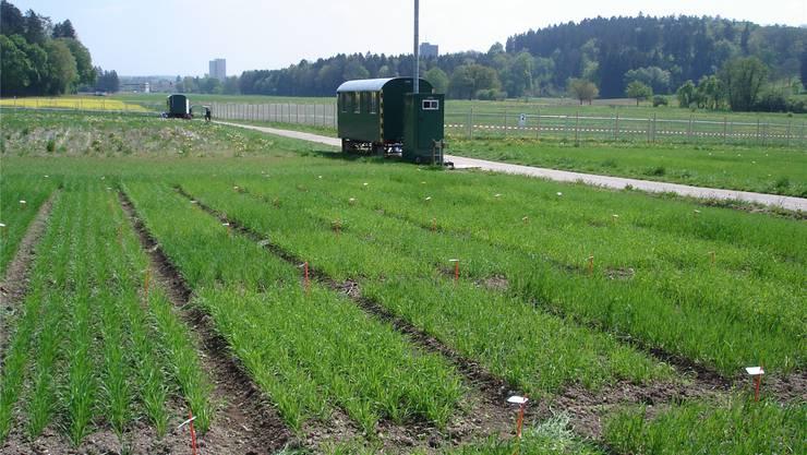 Umstrittene Forschung: Auf diesem Feld in Zürich Affoltern plant die Forschungsanstalt Agroscope im Frühling einen weiteren Gentech-Feldversuch.zvg