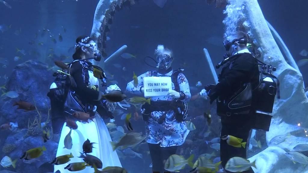 Inmitten von Haien und Fischen: Ungewöhnliche Unterwasser-Hochzeit in England