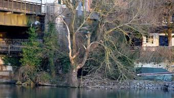 Die Burg unter der Eisenbahnbrücke ist gut zu sehen – mit etwas Glück sieht man hier auch ab und zu Biber.