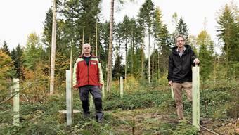 Verjüngungskur für geschundenen Wald