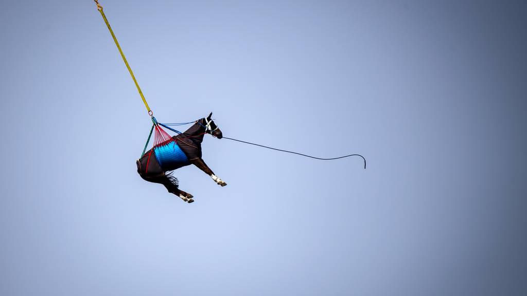Hier wird ein Lufttransport geübt – mit echten Pferden