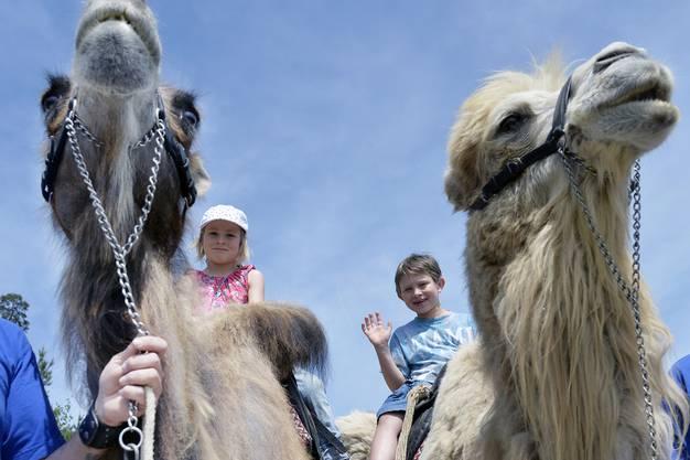 Kinder reiten auf den Kamelen.
