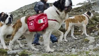 Die Bernhardinerhunde bleiben bis Oktober auf dem Grossen Sankt Bernhard (Archiv)