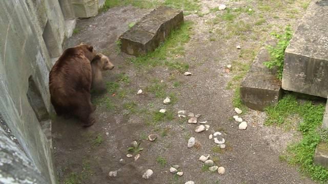 Frühlingsgefühle bei den Berner-Bären