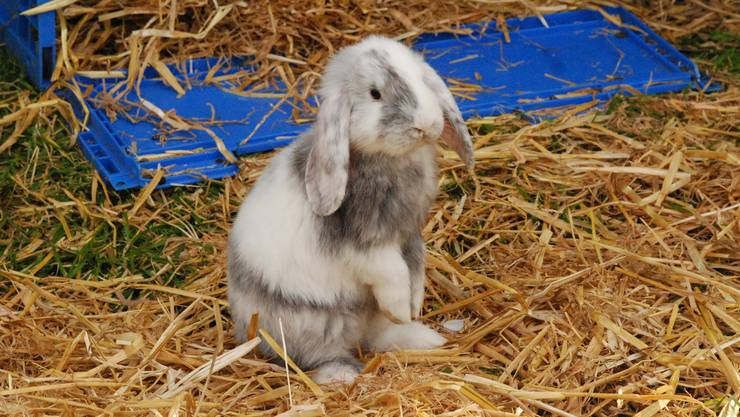 Kleinen Kindern sei es egal, wo das Kaninchen auftaucht. Sie interessieren sich vor allem für das Kaninchen. Archiv