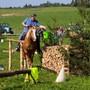 Naturtrail und Holzrücken auf dem Horben
