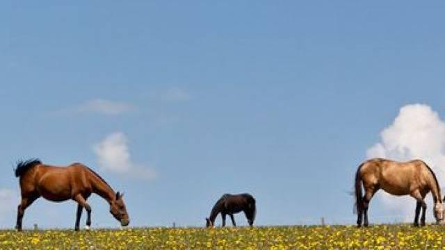 Drei Pferde büxten im Kanton Graubünden aus (Symbolbild)