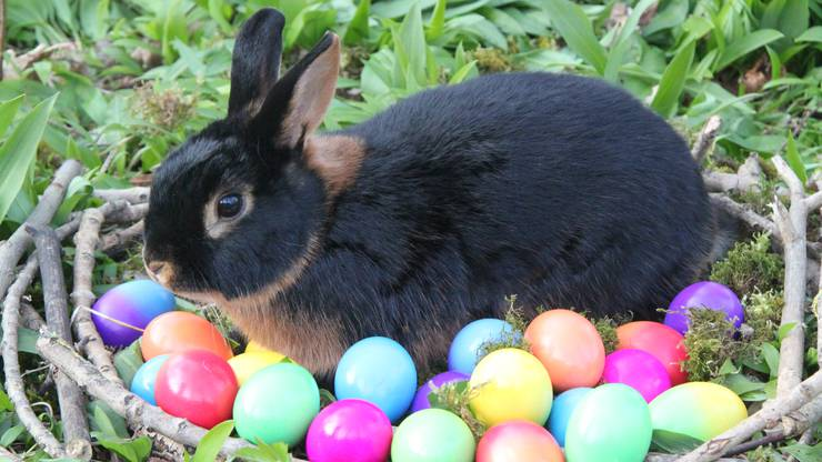 Frohe Ostern !