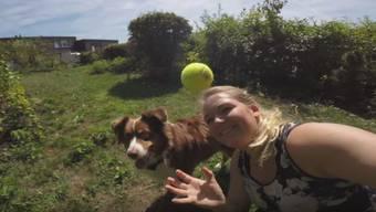 Holl den Ball! Hund rennt los und zerstört das halbe Haus