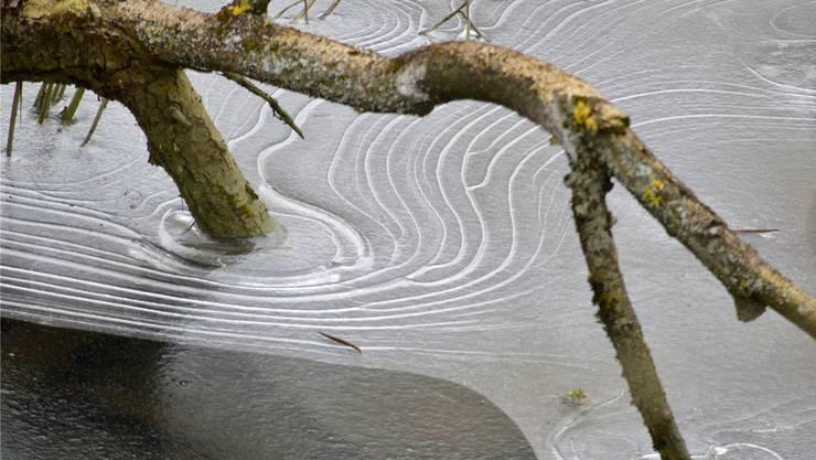 Die schöne Seite der Kälte: Sie inspiriert die Natur zu kunstvollen Zeichnungen, wie Leserin Katrin Rüesch herausgefunden hat.