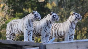 Tiere im Sikypark