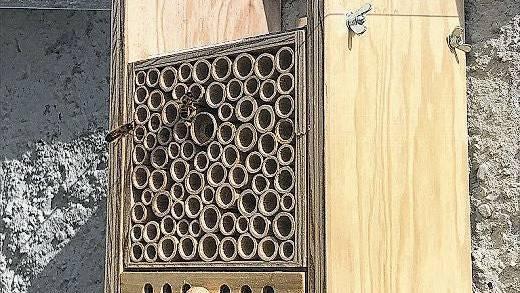 Da geht was: Die Wildbienen nisten im Basler Beehome.