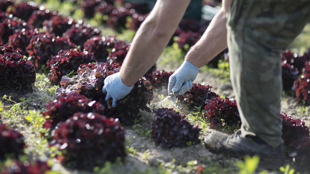 Gratis Gemüse und Früchte schaden dem Markt