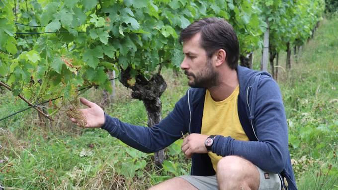 Marc Berger betrachtet die verdorrten Beeren.