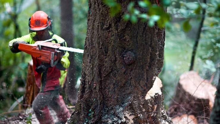 Der Arbeiter verletzte sich beim Entfernen eines Baumstrunks. (Symbolbild)