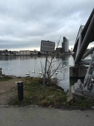Auch am Weiler Rheinufer ist das Füttern verboten. Das Argument: Die Ratten essen mit.