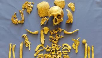 Eines der rund 60 Skeletten, die Anthropologin Sabine Landis wieder zusammensetzt.