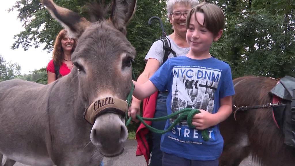 Zwei Esel im Aargau: Tag 1