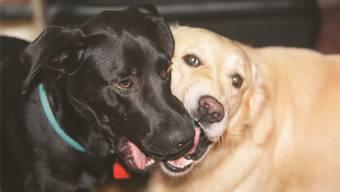 Die Fellfarbe spielt keine Rolle, für jeden Hund ist eine Steuer fällig.