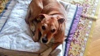Excalibur, der Hund der spanischen Pflegerin, die an Ebola erkrankt ist, wurde eingeschläfert.