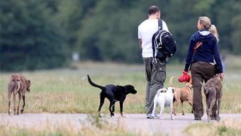 Hunde sind für viele Solothurnerinnen und Solothurner ein wichtiger Teil ihres Lebens.