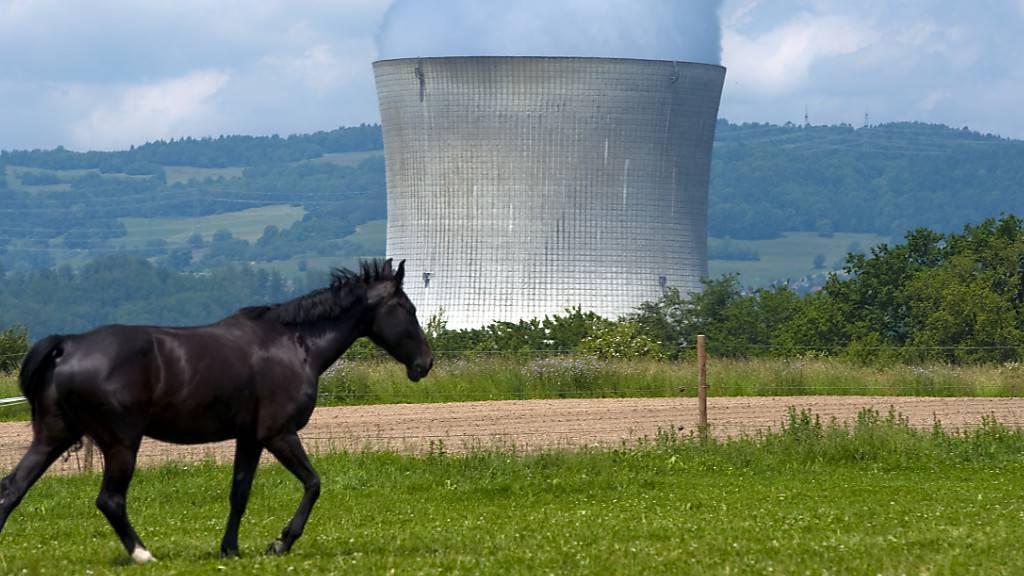 Kernkraftwerk Leibstadt nach Abschaltung wieder in Betrieb