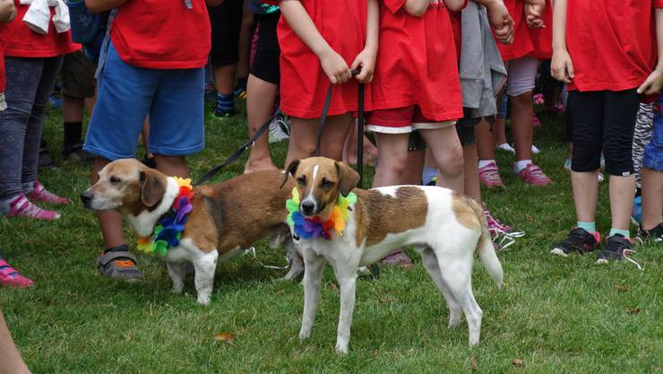 Sogar diese zwei Hunde waren geschmückt.