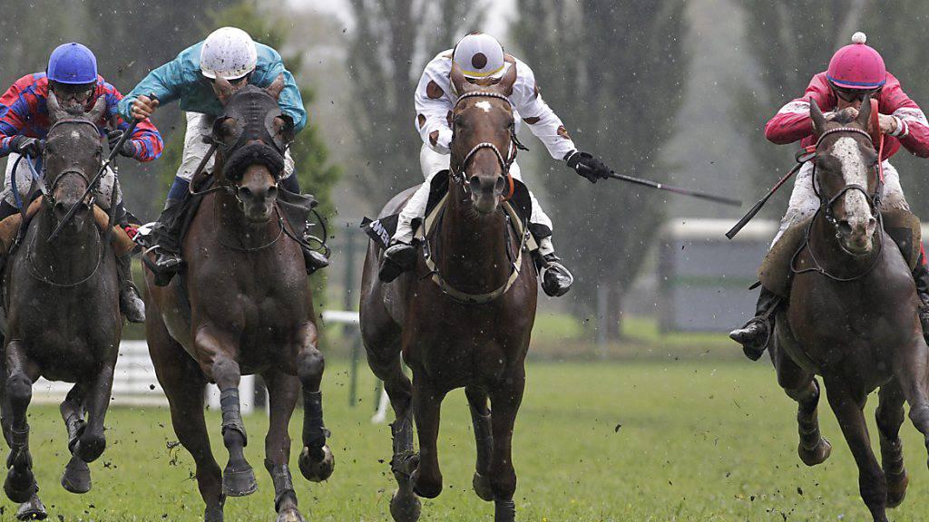 Corona-Fall an Berner Pferdesportanlass - Keine Quarantäne