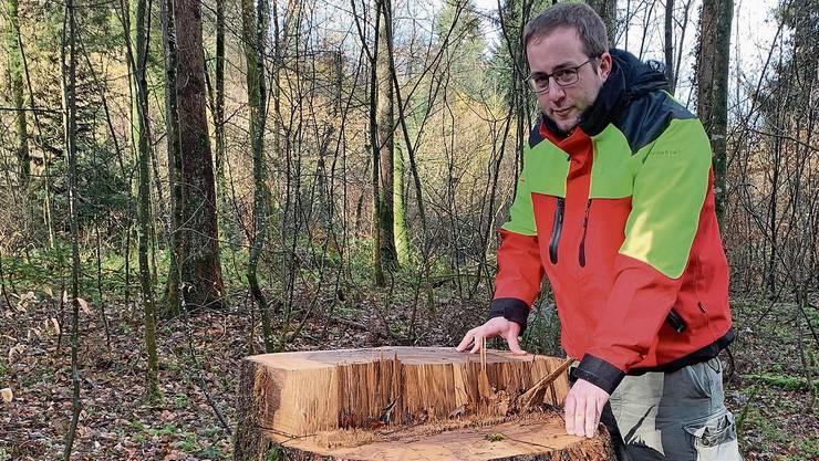Kranke Eschen sind auf Wurzelfäulnis anfällig, erklärt Matthias Ott.