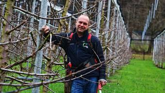 Für eine reiche Kirschenernte im Frühsommer schneidet Landwirt Bruno Wirth auf seiner Kirschbaumplantage die Äste der Bäume zurück.