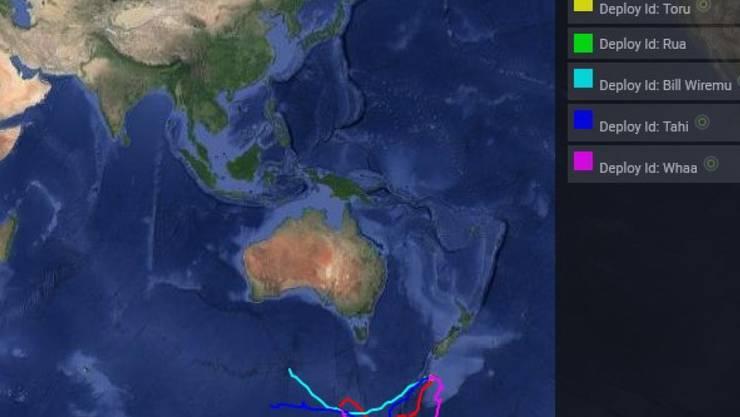 Routen von sechs Walen können im Internet unter https://www.tohoravoyages.ac.nz/tracks-of-the-tohora/ verfolgt werden. Wider erwarten schwammen zunächst alle nach Süden, inzwischen sind sie aber Richtung wärmere Gefilde abgebogen. (Screenshot)