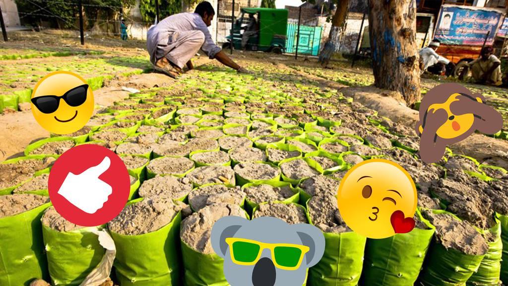 Neuer Guinness-Rekord – 1,5 Millionen Inder pflanzen 66'750'000 Bäume in 12 Stunden