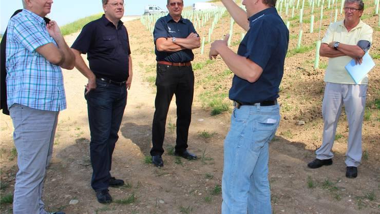 Michael Deppeler erklärt den Rebberg (von links): Jürg Moser, Bruno Gretener (Gemeindeammann), Walter Deppeler und René Bleiker.