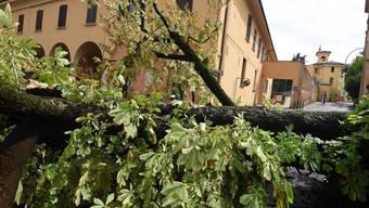 Umgestürzte Bäume nach Stürmen und Gewittern: Die Region um Bologna (Bild) wurde von einer Schlechtwetterfront überrascht.