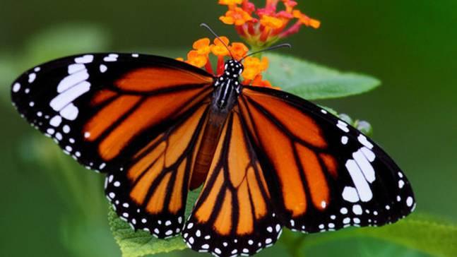 Schmetterlinge werden als eine der Stellvertreter für alle Tiere gezählt.