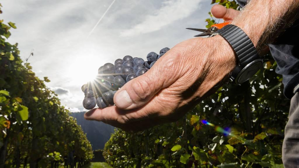 Wein im FM1-Land: Das kommt richtig gut, wenn...