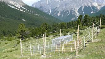 Im Schweizerischen Nationalpark untersuchten WSL-Forschende mithilfe von Zäunen, welche Rolle Tiere verschiedener Grösse für das Ökosystem einer Wiese spielen.
