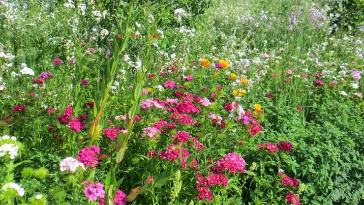 Juni haben wir, dann das Blühen der Blumen.