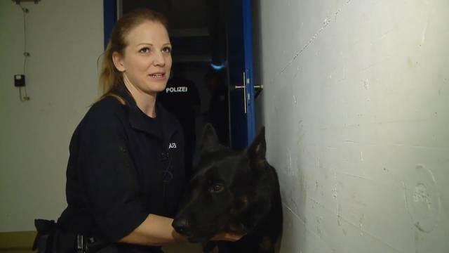 «Jeder Einsatz bedeutet eine gewisse Gefahr» – wenn Polizeihunde trainieren